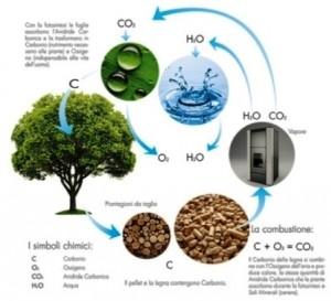 Ciclo ecologico